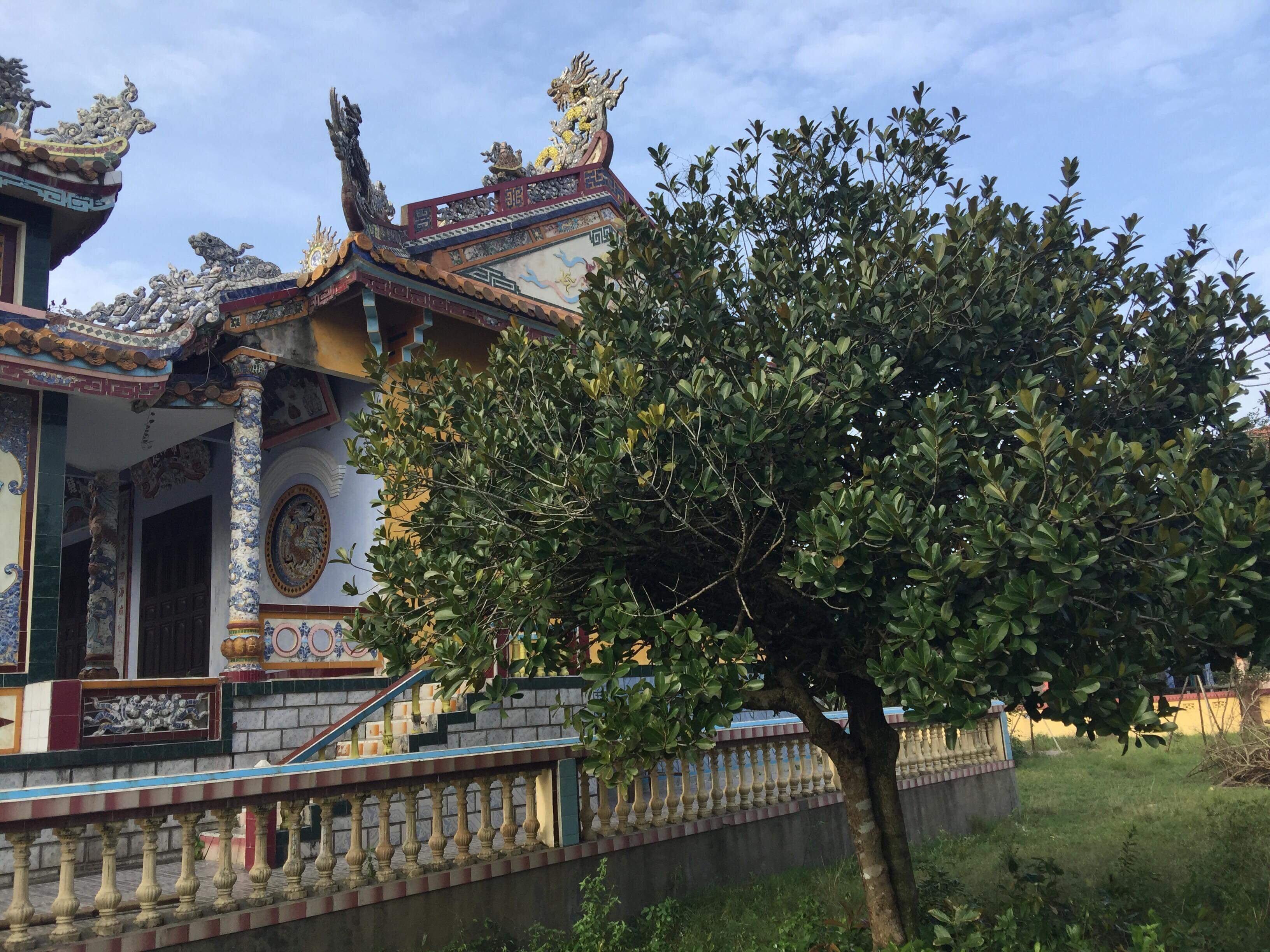Điều kì diệu từ cây táo ở đình làng An Bằng
